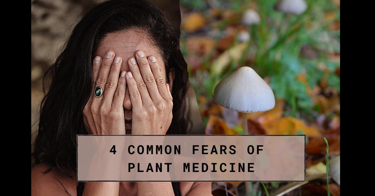 Common fears of Plant Medicine